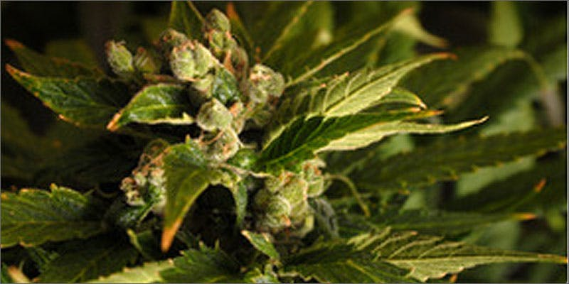 super hero strains viper 2 Can You Master These 3 Awesome Smoke & Vape Tricks By 4/20?