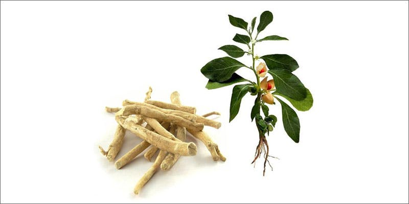 11 cannabis detox ginger root The Latest Cause For Concern With Colorado Cops