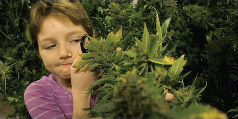 brave mykayla inspecting cannabis plant The Latest Cause For Concern With Colorado Cops