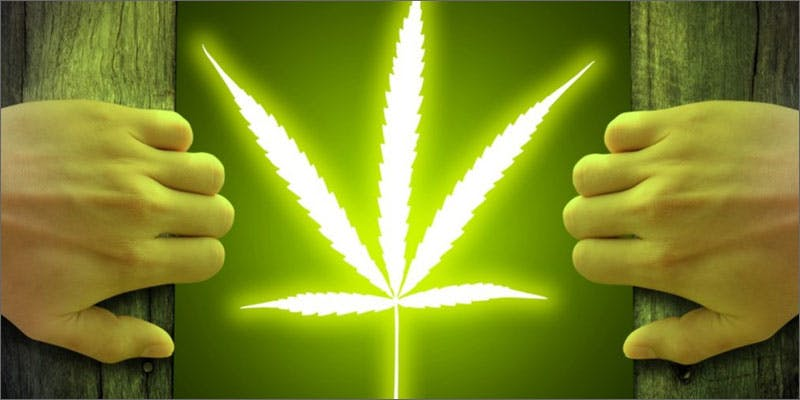 cannabis net leaf light New Cannabis Toothpaste Has People Losing Their Minds