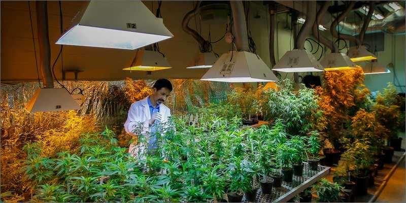 dea lying about research grow warehouse Has the DEA Has Been Lying About Research Cannabis?