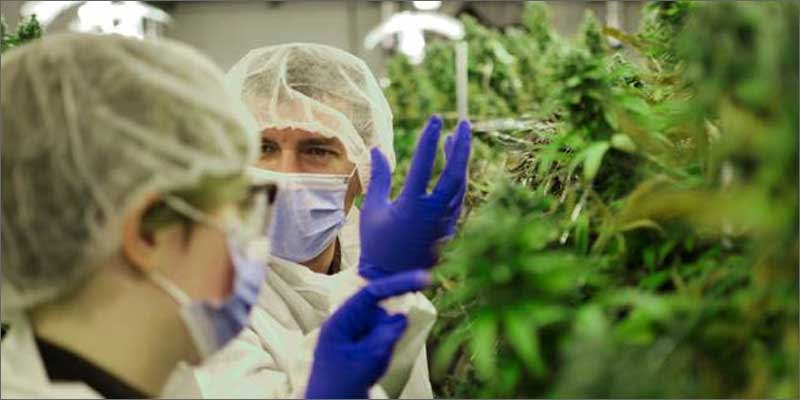 florida cannabis research scientists The Latest Cause For Concern With Colorado Cops