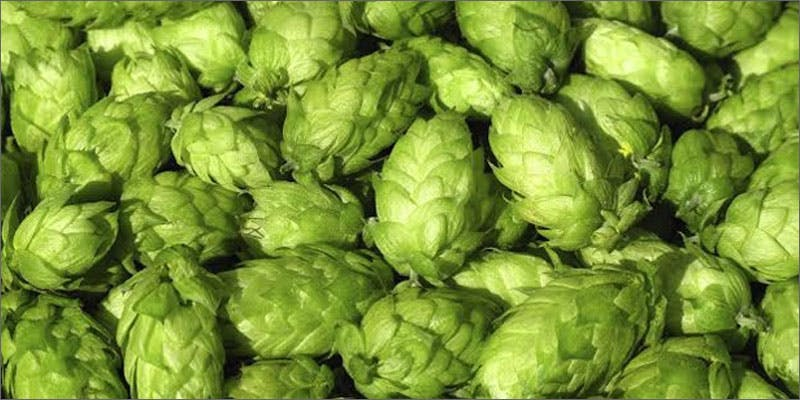hops versus marijuana hopspile The Latest Cause For Concern With Colorado Cops