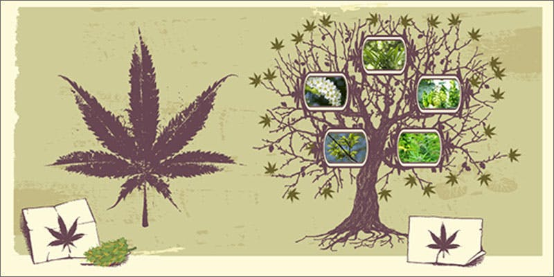 hops versus marijuana illustration The Latest Cause For Concern With Colorado Cops