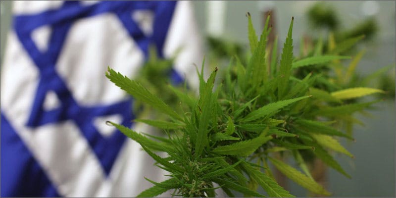 jerusalem cannabis study flag plant New Cannabis Toothpaste Has People Losing Their Minds