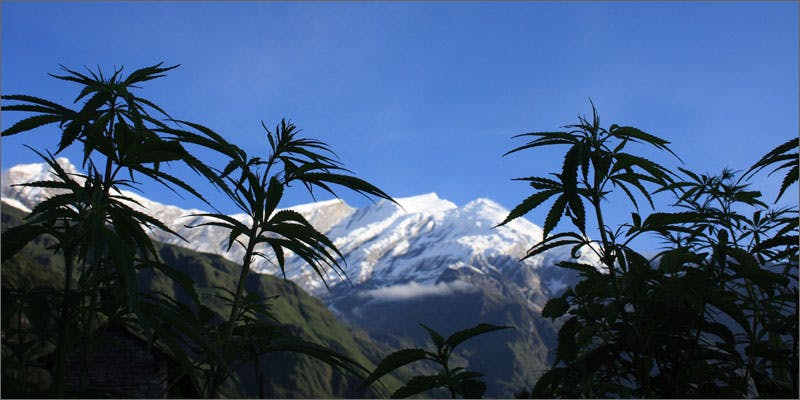 new zealand legalize medical cannabis mountains Opposition Leader Vows To Legalize Medical Cannabis Pretty Quickly