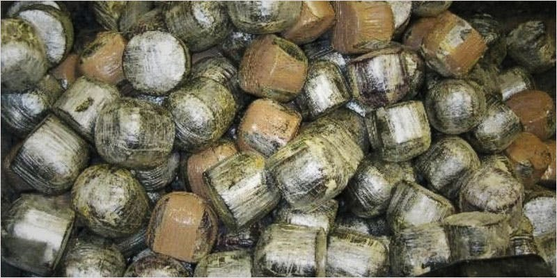 stuffed coconut 2 The Latest Cause For Concern With Colorado Cops