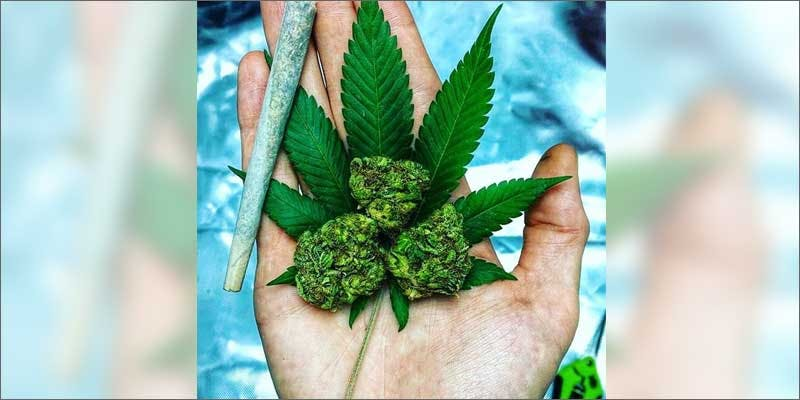 1 world names for cannabis hand A Touch Of Glass #25: Ladys Choice
