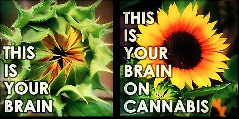 13 Reasons Weed 11 All In The Mind #5: Cannabis And Bipolar Disorder