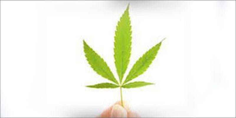 3 cannabis cannot be prescribed in hospitals leaf All In The Mind #5: Cannabis And Bipolar Disorder
