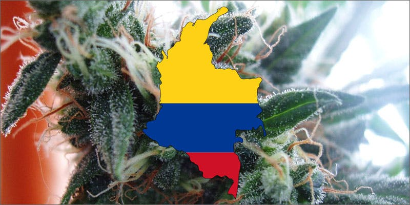 3 world names for cannabis colombia bareta A Touch Of Glass #25: Ladys Choice