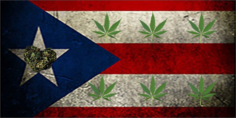 9 world names for cannabis puertorico mota A Touch Of Glass #25: Ladys Choice