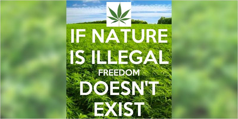 Democratics Offically 3 Its Official, Democrats are Tackling Cannabis Reform