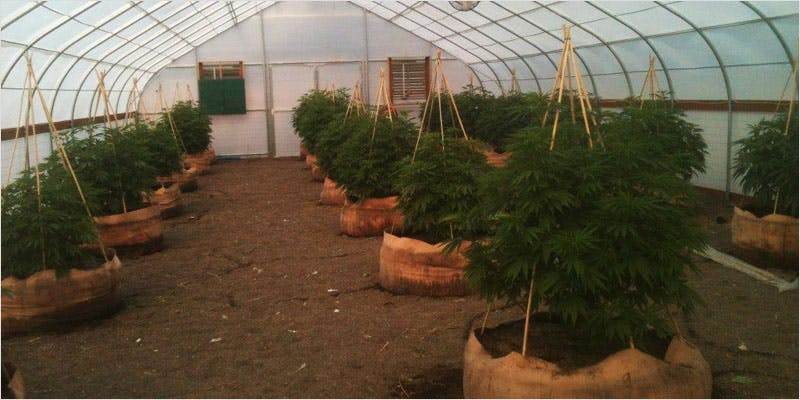 Greenhouse Grows are Awesome 12 Getting Weed In Jamaica Is Now Easy As Renting A Car