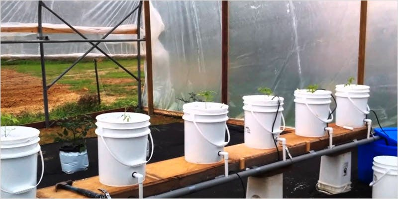 Greenhouse Grows are Awesome 2 Best Of Both Worlds: All You Need To Know About Greenhouse Grows