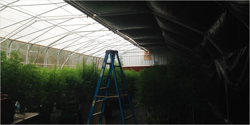 Greenhouse Grows are Awesome 4 Getting Weed In Jamaica Is Now Easy As Renting A Car