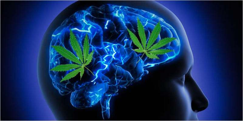 Huntington's Disease 2 Turns Out Cannabis Might Treat Huntington's Disease