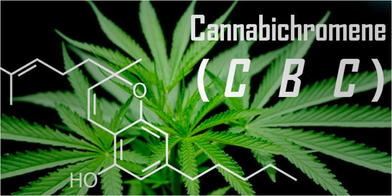 cannabinoids101 1 Getting Weed In Jamaica Is Now Easy As Renting A Car