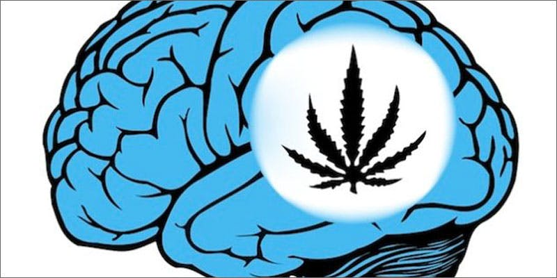 cannabis users more knowledgable experts diploma brain illustration Getting Weed In Jamaica Is Now Easy As Renting A Car