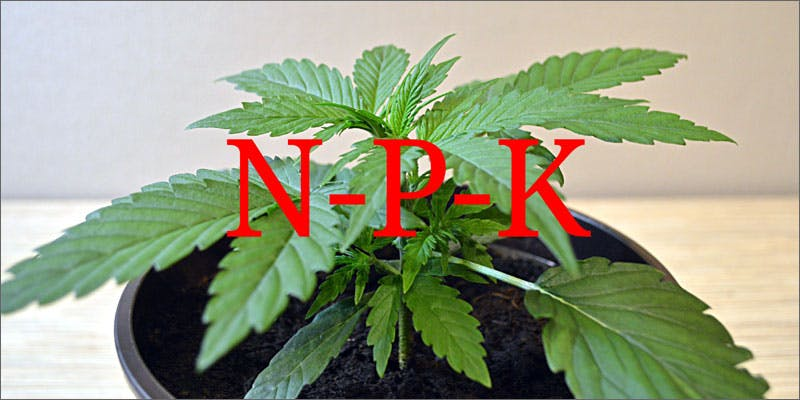 common mistakes new marijuana growers nok Getting Weed In Jamaica Is Now Easy As Renting A Car