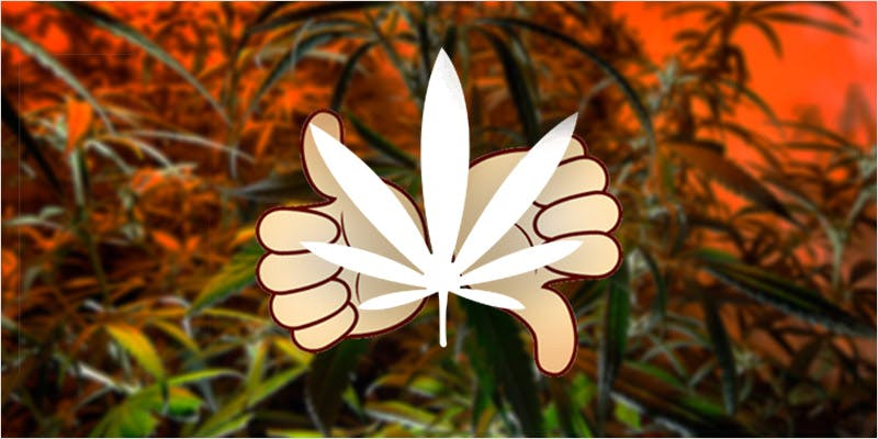 Demand Cannabis Legalization