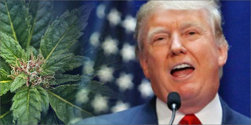 presidential stance cannabis trump New Cannabis Toothpaste Has People Losing Their Minds