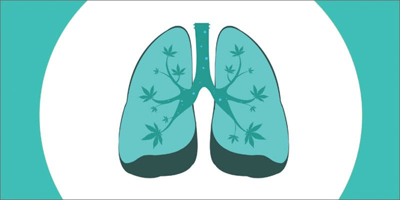 smoke more weed lungs illustration A Touch Of Glass #25: Ladys Choice