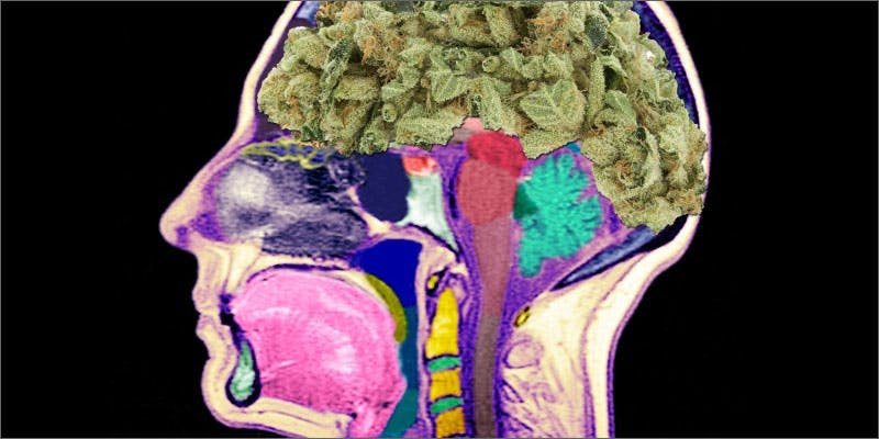 smoke more weed weed brain A Touch Of Glass #25: Ladys Choice