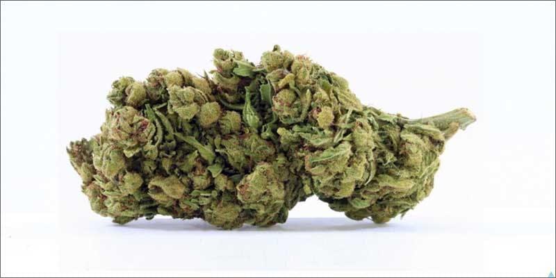 1 best medical marijuana strains avidekel Get Ready Florida! Legal Weed Will Be Yours Next Week