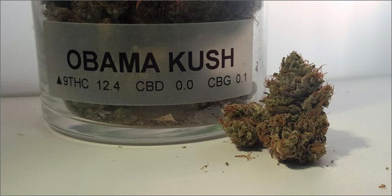 1 cannabis strains named after celebrities obama kush THC: Everything You Need To Know About Delta9 Tetrahydrocannabinol