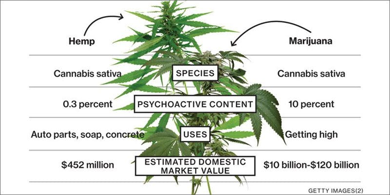 1 hemp root powerful diagram Cannabis And Sex: How Much Do You Really Know?