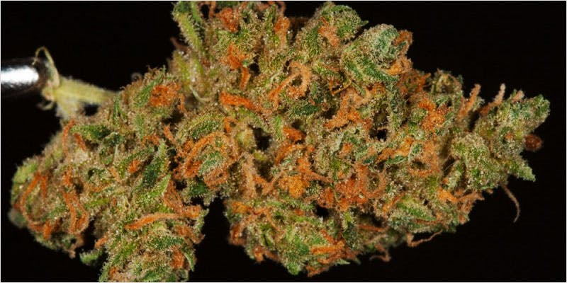 10 Legendary Canadian 3 Get Ready Florida! Legal Weed Will Be Yours Next Week