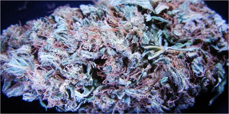 10 Legendary Canadian 4 Get Ready Florida! Legal Weed Will Be Yours Next Week