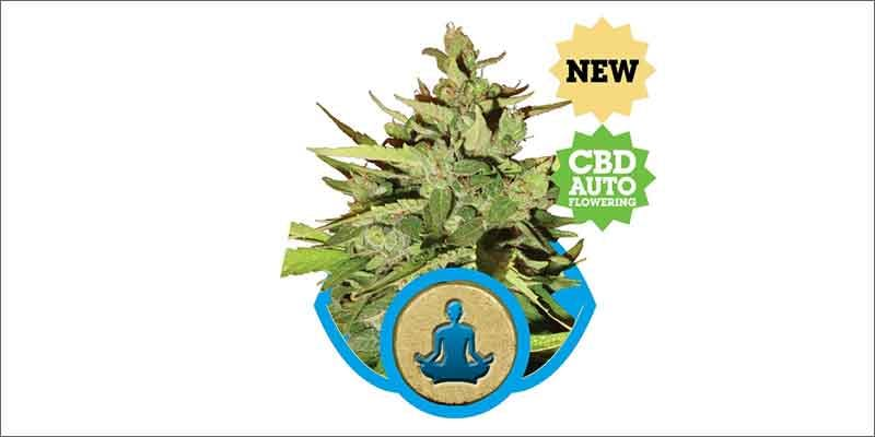 10 best medical marijuana strains stress killer Get Ready Florida! Legal Weed Will Be Yours Next Week
