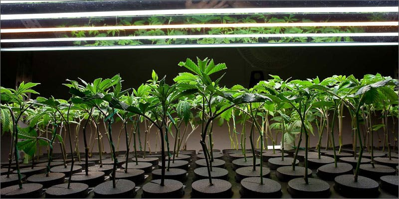 2 hacks for growing weed at home clones Get Ready Florida! Legal Weed Will Be Yours Next Week