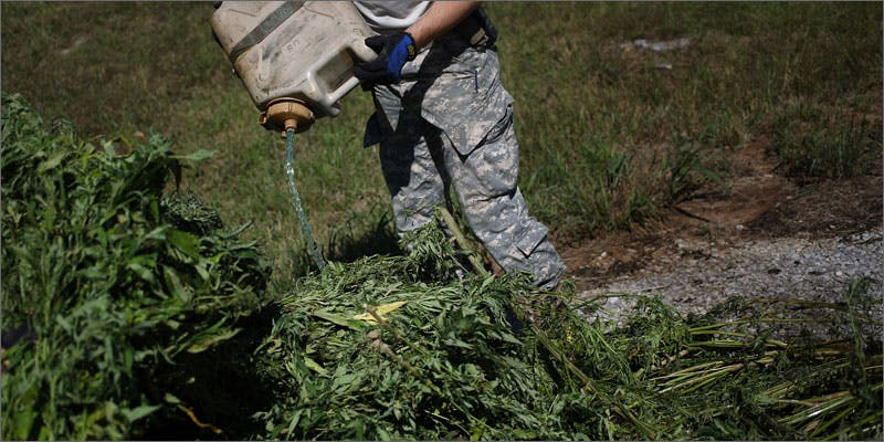 3 cops burn weed crops gasoline Get Ready Florida! Legal Weed Will Be Yours Next Week