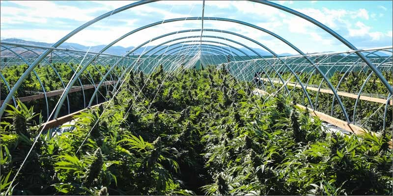 3 summer weed tourism destinations oregon THC: Everything You Need To Know About Delta9 Tetrahydrocannabinol