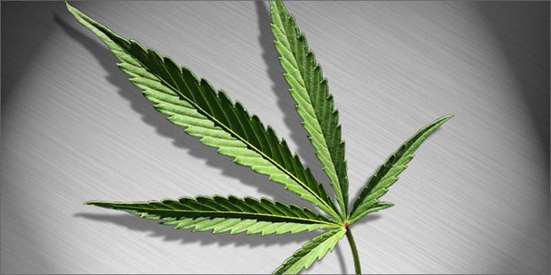4 all in the mind cannabis bipolar disorder leaf All In The Mind #5: Cannabis And Bipolar Disorder