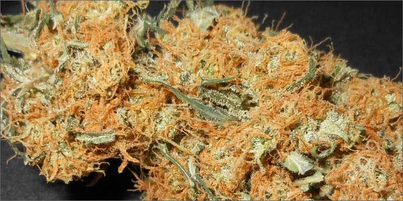 4 top 10 cannabis google searches bud closeup THC: Everything You Need To Know About Delta9 Tetrahydrocannabinol