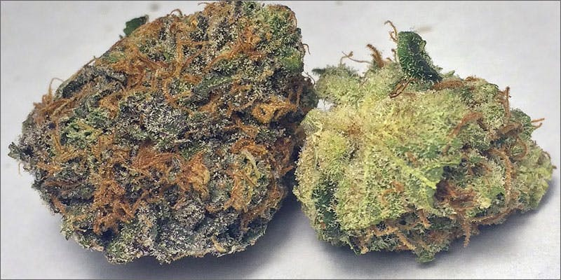 5 cannabis strains for migraines purple kush THC: Everything You Need To Know About Delta9 Tetrahydrocannabinol