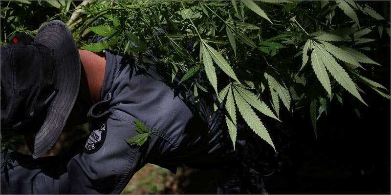 6 cops burn weed crops hauling THC: Everything You Need To Know About Delta9 Tetrahydrocannabinol