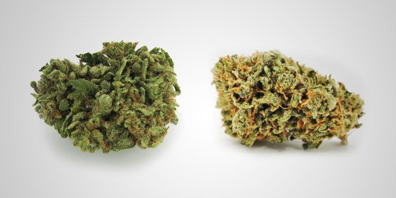 7 Hottest New Sativas 1 All In The Mind #5: Cannabis And Bipolar Disorder