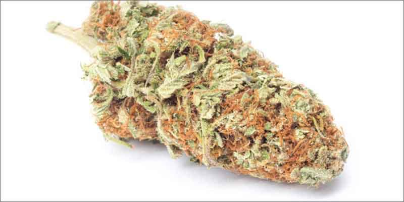 8 best medical marijuana strains harlequin All In The Mind #5: Cannabis And Bipolar Disorder