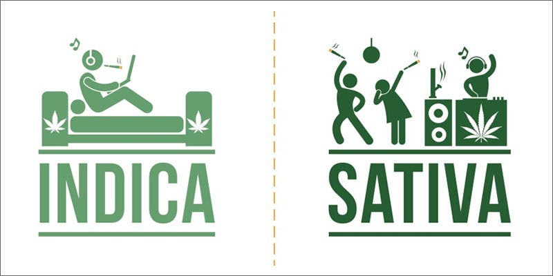 8 top 10 cannabis google searches indica v sativa THC: Everything You Need To Know About Delta9 Tetrahydrocannabinol