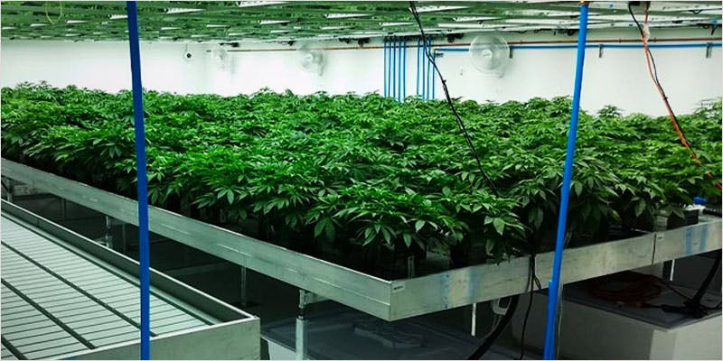 Know About Hydroponics 4 This Machine Grows Weed For You & Sends You A Text When Its Ready