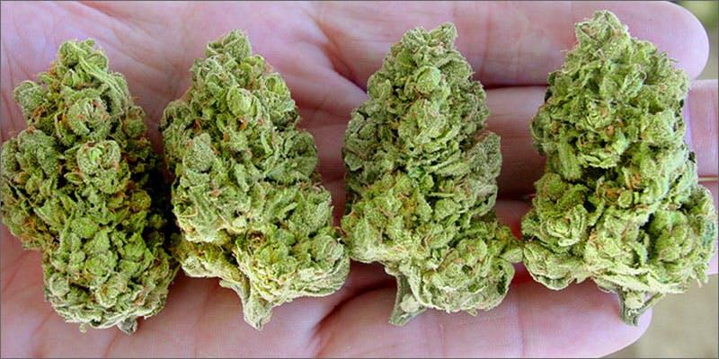 weed industry