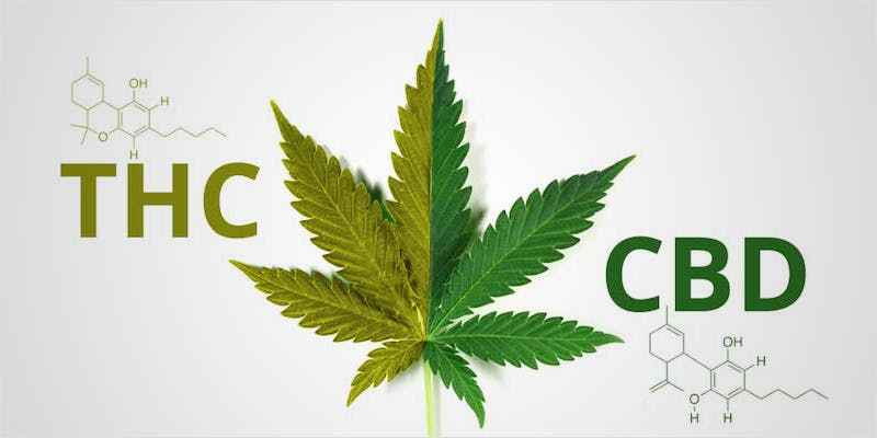 THC article update hero 11 Best Clear Headed Sativa Strains To Help You Concentrate
