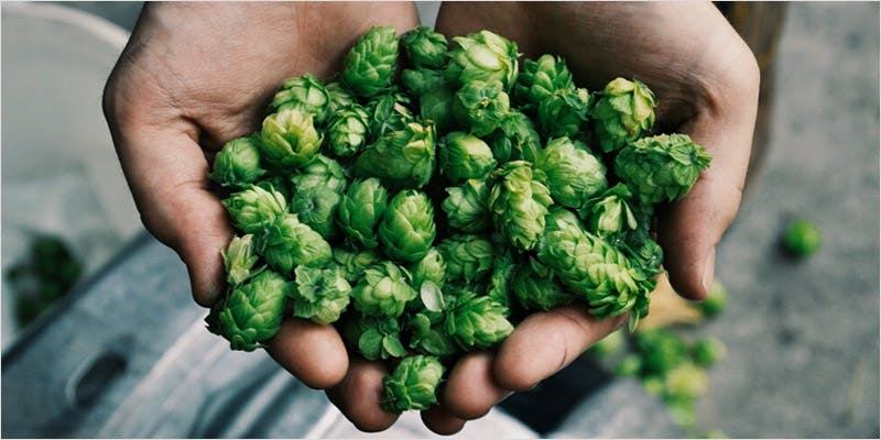 Terpene Infused Beer 2 THC: Everything You Need To Know About Delta9 Tetrahydrocannabinol