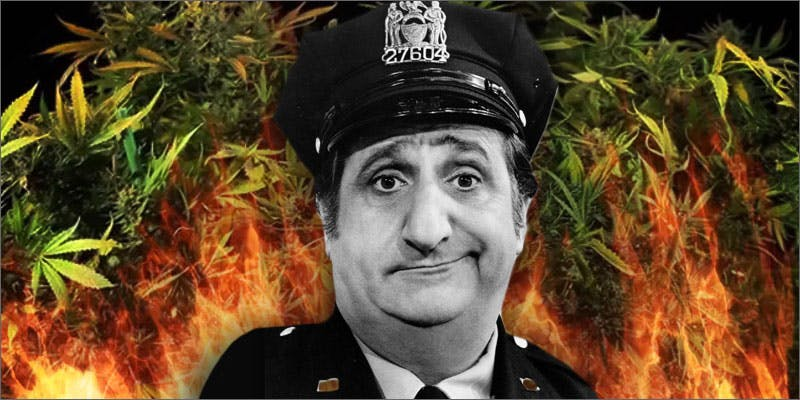 dad burnt weed