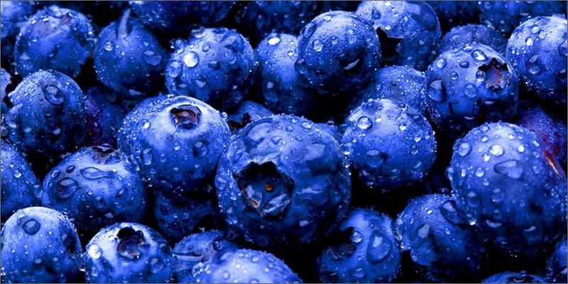 Blueberry strains